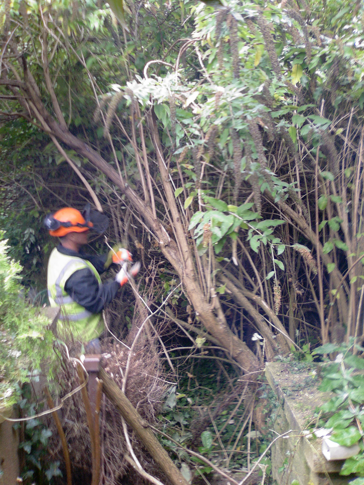 Leeshall Landscaping Tree Surgery Sheffield